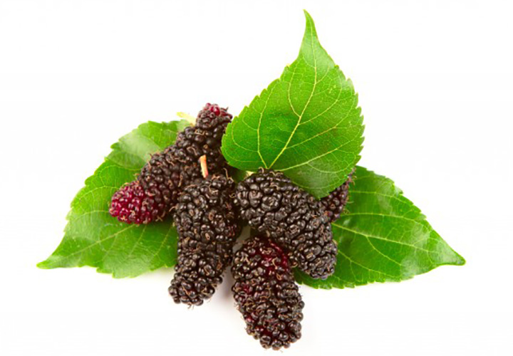 Benefits of Mulberry or Shahtoot Leaves